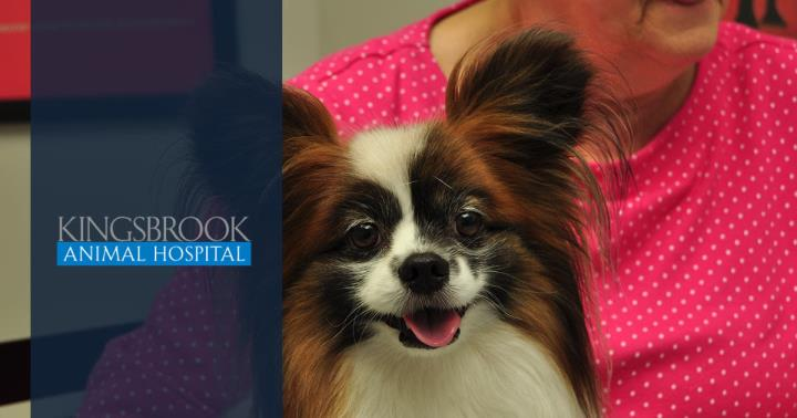 Kingsbrook Animal Hospital: Cardella Adrienne M DVM