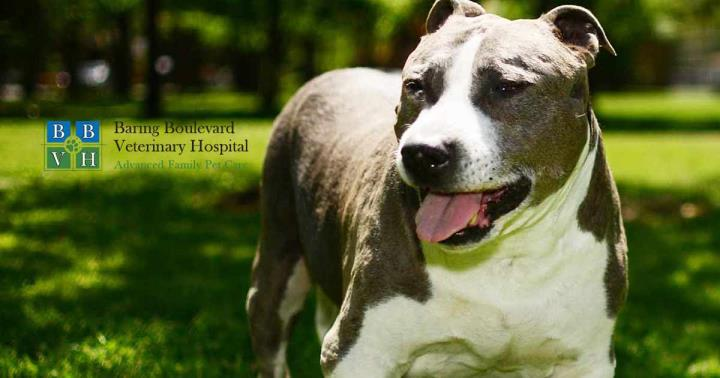 Baring Boulevard Veterinary Hospital: Williams Courtney DVM